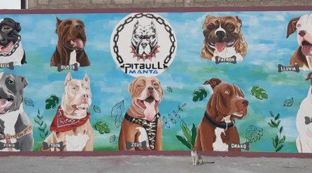 Los perros Pitbull tendrán su mural en Manta